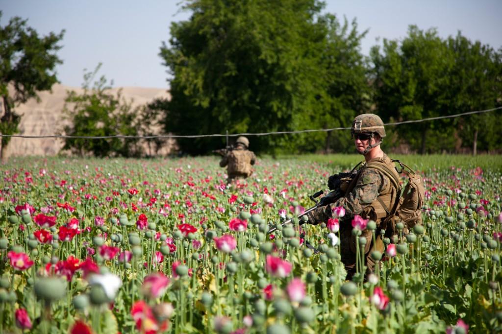 U.S. Soldiers Patrol Opium Poppy Field