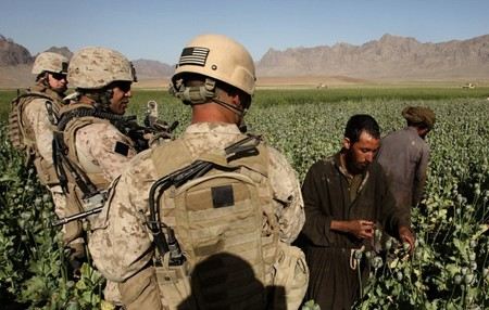 US Soldiers in Opium Poppy Field